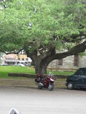Bike_in_front_of_the_hanging_tree