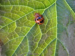 Bug_in_my_garden